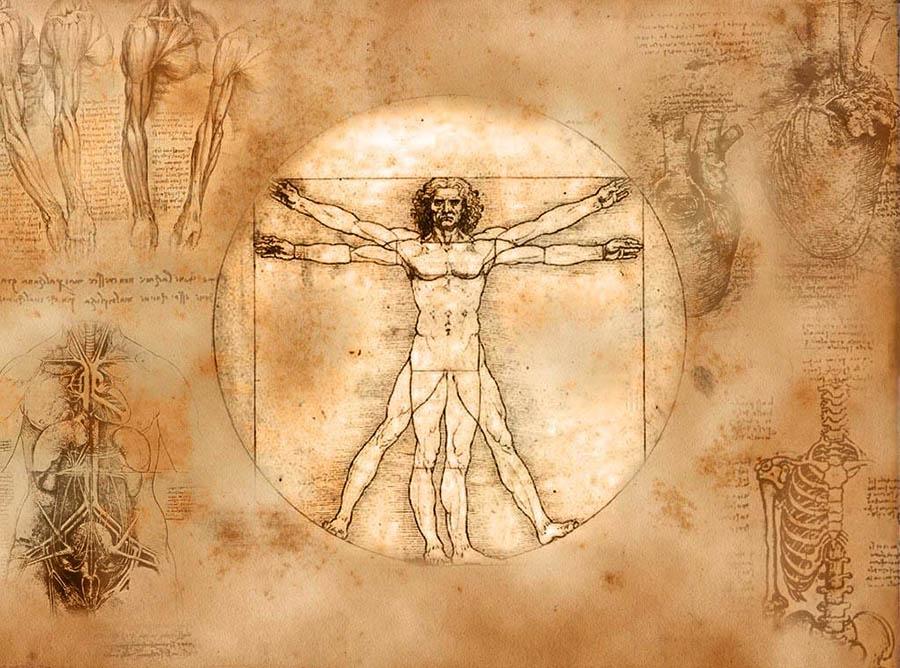 Как работает человеческий организм